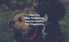 How Dry Slide Technology Assures Quality Pet Diagnostics